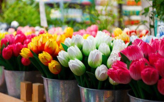 срезаем и храним тюльпаны