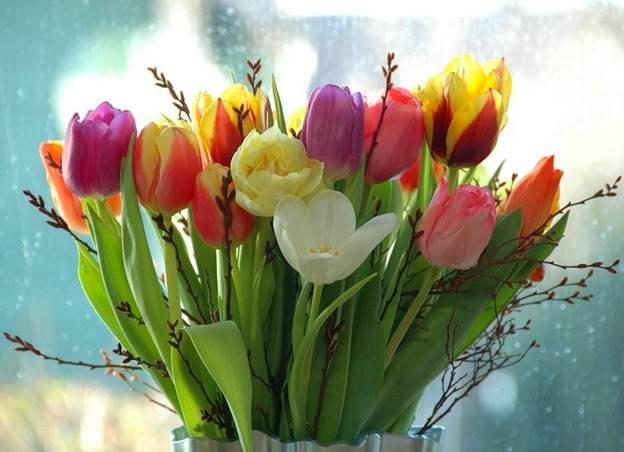 Как подготовить луковицы тюльпанов к зимнему цветению?