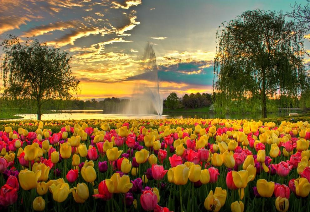 Ошибки при выгонке тюльпана